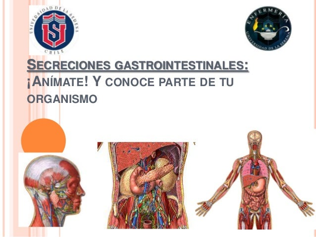 SECRECIONES GASTROINTESTINALES:¡ANÍMATE! Y CONOCE PARTE DE TUORGANISMO