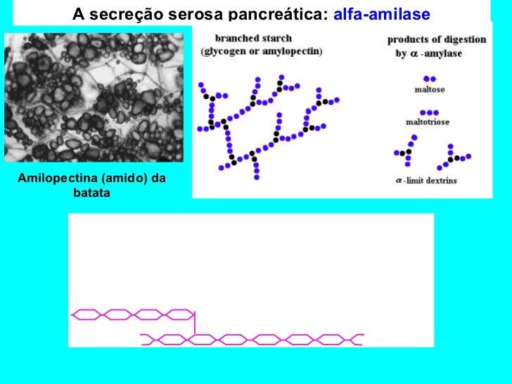 Perfil de proteases em células de carcinoma de cabeça e pescoço 7