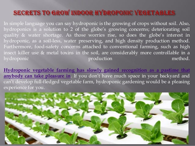 2. How To Grow Hydroponic Vegetables ...
