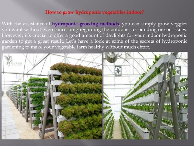 Secrets to grow indoor hydroponic vegetables