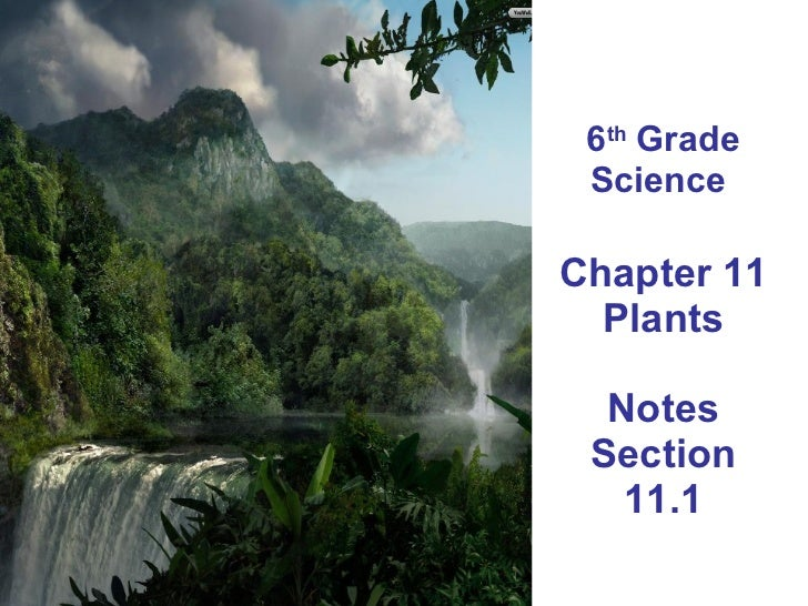 6 th  Grade Science  Chapter 11 Plants Notes Section 11.1