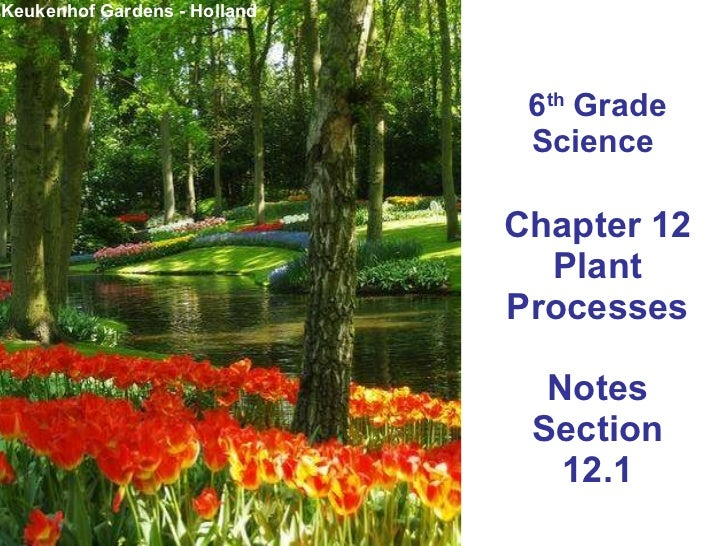 6 th  Grade Science  Chapter 12 Plant Processes Notes Section 12.1 Keukenhof Gardens - Holland