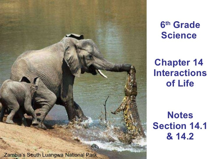 6 th  Grade Science  Chapter 14  Interactions of Life Notes Section 14.1 & 14.2 Zambia's South Luangwa National Park