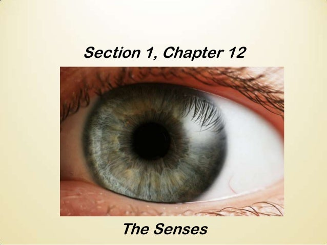 Section 1, Chapter 12  The Senses