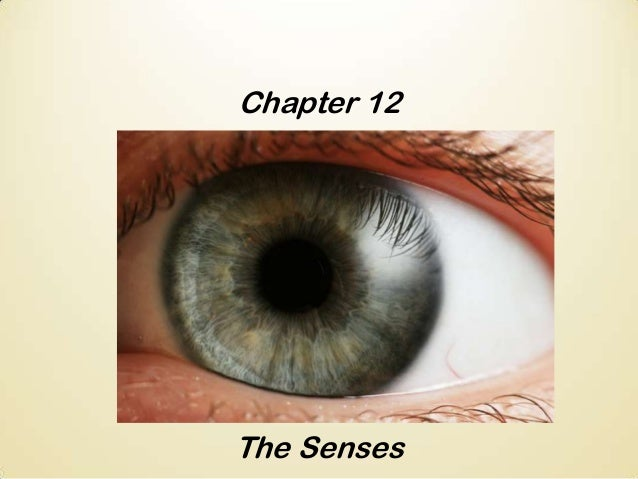 Chapter 12  The Senses