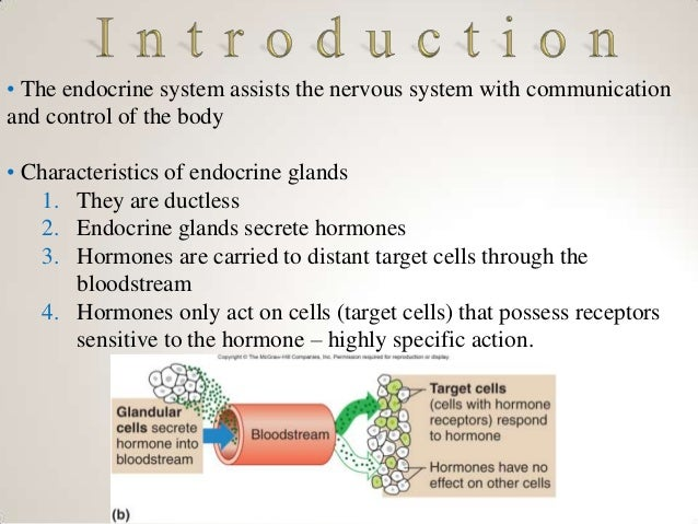 chapter 13 endocrine system 18 chapter 13 answers matching word parts 1 131 adren/o 132 acr/o 133  gonad/o dipsia 135 crin/o matching word parts 2 ism 137 pancreat/o 138.