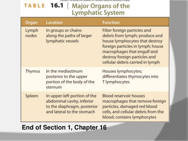 chapter 22 lymphatic system Chapter 22: the lymphatic system, nonspecific resistance to disease, and immunity visual anatomy requires the macromedia shockwave player plugin.
