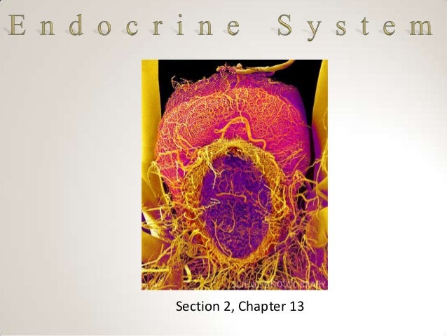 Section 2, Chapter 13