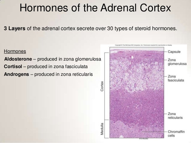 steroid hormones exert their effect by