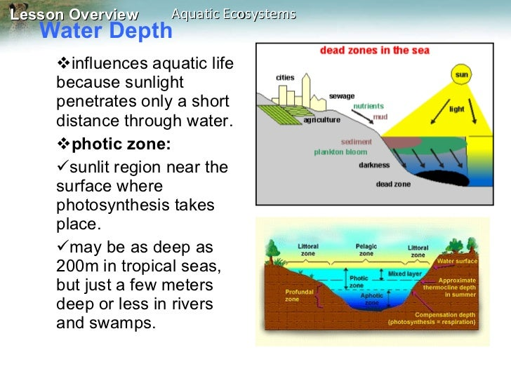 Water And Aquatic Ecosystems Worksheet Answers - Worksheet ...