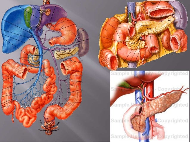 sectional anatomy of abdomen, Human body