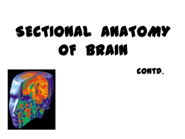 SELLA and JUXTASELLAR anatomy