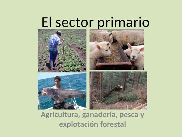 El sector primario Agricultura, ganadería, pesca y explotación forestal