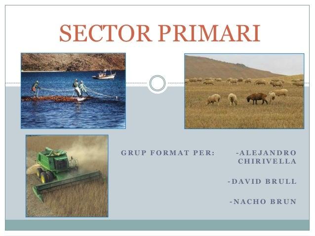 SECTOR PRIMARI  GRUP FORMAT PER:  -ALEJANDRO CHIRIVELLA -DAVID BRULL  -NACHO BRUN