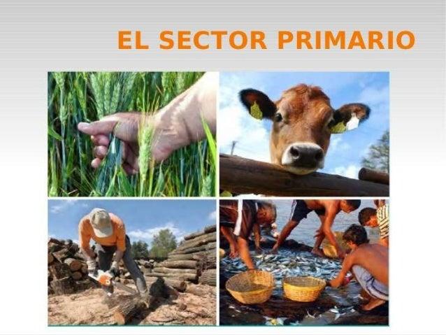 NDICE: • • • • • • • • • • • • • •  Definición sector primario. Agricultura. Ganadería. Explotación forestal. Pesca. Probl...