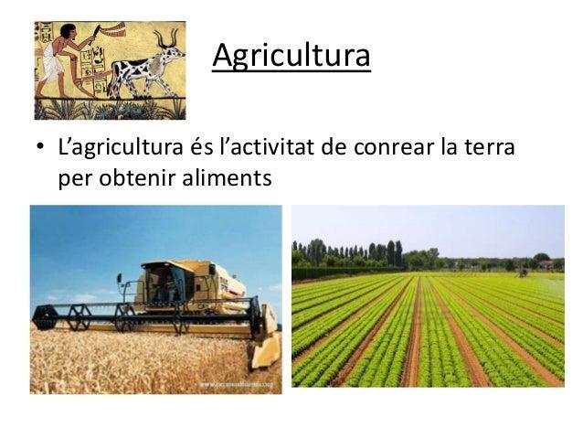 Sectors de producci - Accura viladecans ...