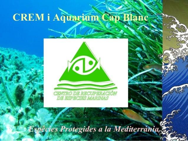 CREM i Aquarium Cap Blanc Espècies Protegides a la Mediterrània