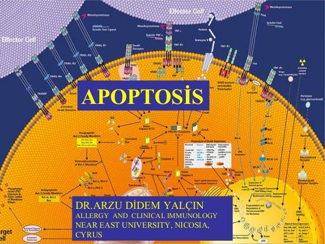 APOPTOSİS  DR.ARZU DİDEM YALÇIN  ALLERGY AND CLINICAL IMMUNOLOGY  NEAR EAST UNIVERSITY, NICOSIA,  CYRUS