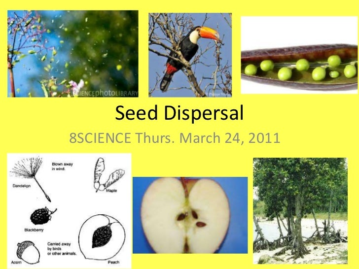 Seed Dispersal<br />8SCIENCE Thurs. March 24, 2011<br />