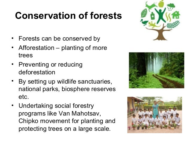 essay need forest conservation We will write a custom essay sample on forest conservation specifically for  when we look into conservation possibilities, all sides, sectors, direct and indirect reasons need to be assessed before coming to any kind of decision  forest protection and nature conservation laws were in effect as early as 1,700 b c two thousand years ago.