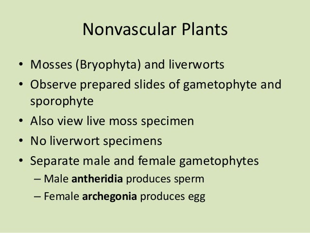 Nonvascular Plants • Mosses (Bryophyta) and liverworts • Observe prepared slides of gametophyte and sporophyte • Also view...