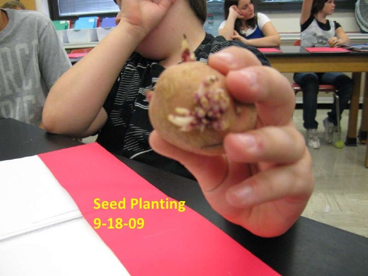 Seed Planting 9-18-09<br />