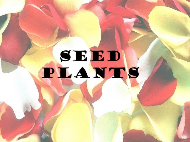 SeedPlants