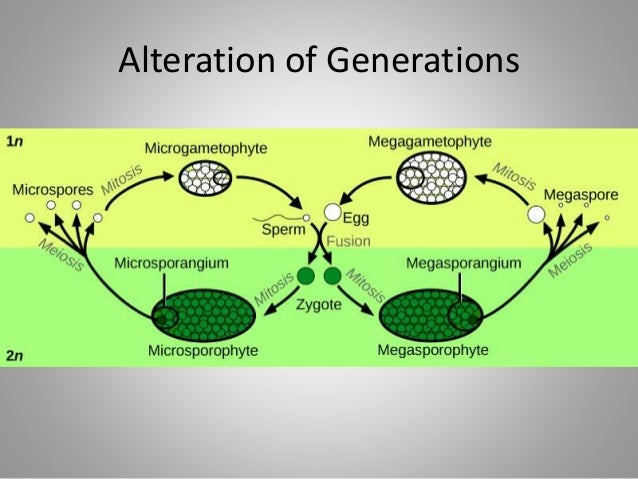 Alteration of Generations
