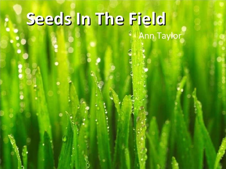 Seeds In The Field Ann Taylor