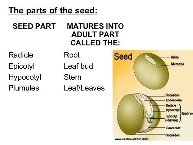Seeds 2016