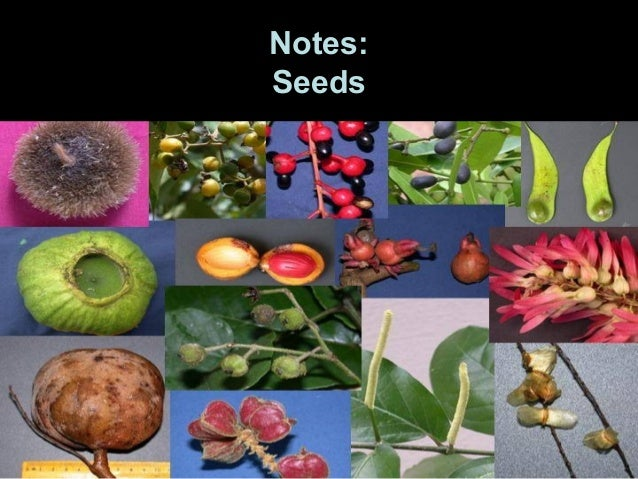 Notes:Seeds
