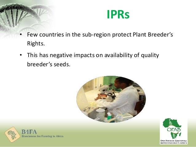 B4FA 2012 Nigeria: Seed Trade Environment in Nigeria ...
