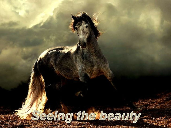 Seeing the beauty<br />