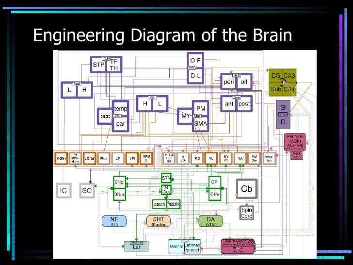 Segment 1 brain anatomy anatomy physiology of the central nervous system 2 engineering diagram ccuart Gallery