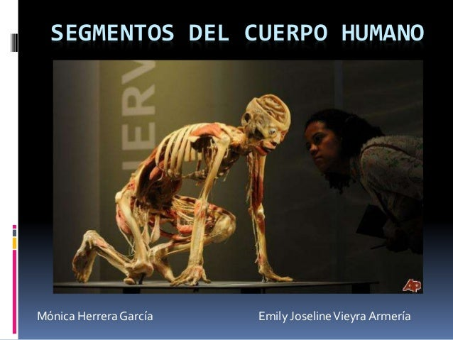 SEGMENTOS DEL CUERPO HUMANO Mónica Herrera García Emily JoselineVieyra Armería