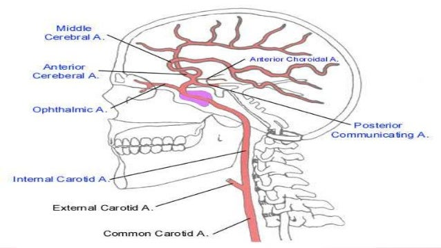 Segments of internal carotid artery
