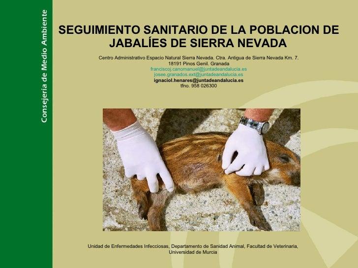 SEGUIMIENTO SANITARIO DE LA POBLACION DE JABALÍES DE SIERRA NEVADA   Centro Administrativo Espacio Natural Sierra Nevada. ...