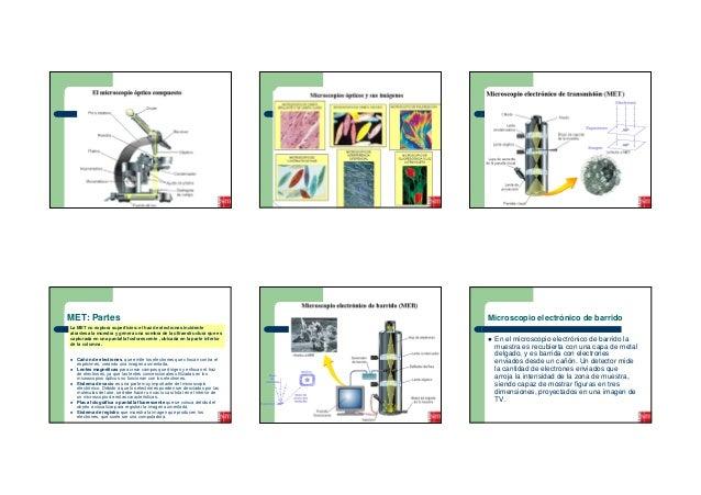 MET: Partes                                                                  Microscopio electrónico de barridoLa MET no e...
