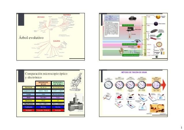 Árbol evolutivo    Comparación microscopio óptico    y electrónico                       MICROSCOPIO           MICROSCOPIO...