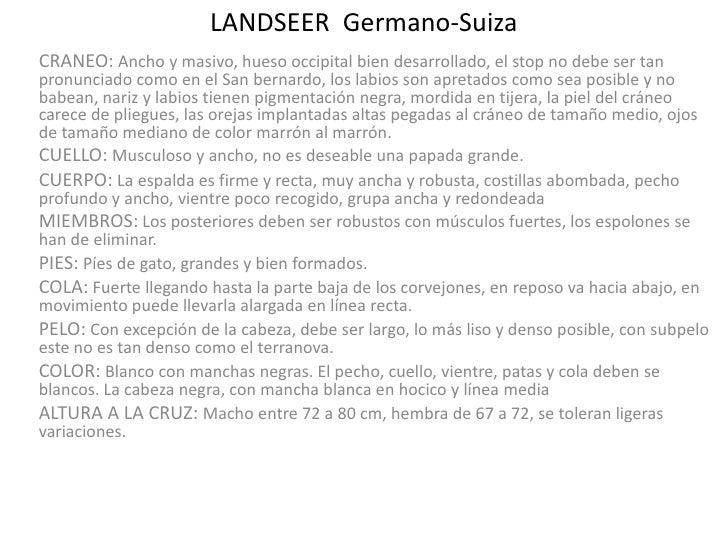 LANDSEER  Germano-Suiza<br />CRANEO: Ancho y masivo, hueso occipital bien desarrollado, el stop no debe ser tan pronunciad...