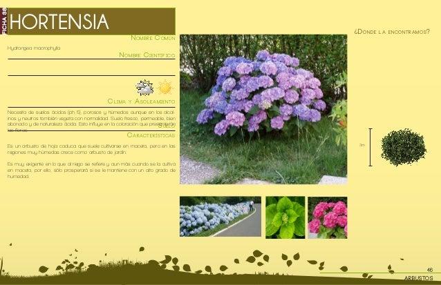Cat logo de plantas - Lista nombre arbustos ...