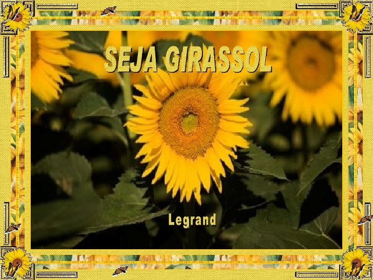SEJA GIRASSOL Legrand