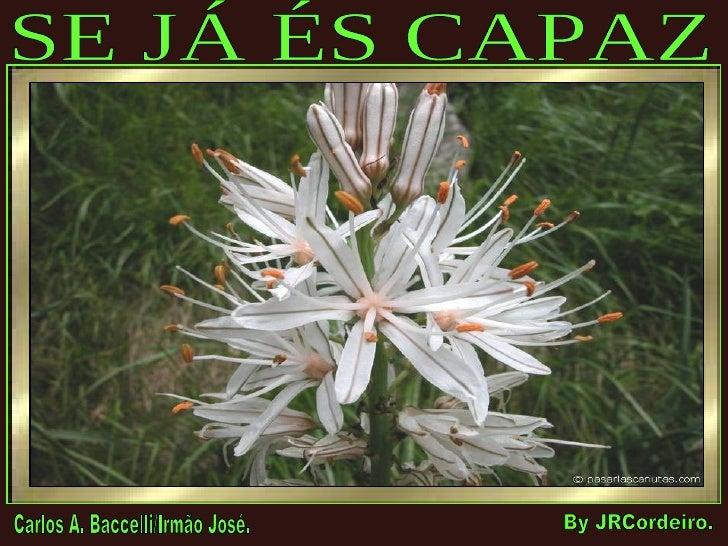 SE JÁ ÉS CAPAZ Carlos A. Baccelli/Irmão José. By JRCordeiro.