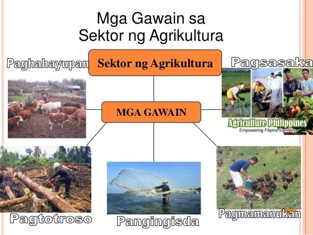 kalagayan ng agrikultura ng bansa Dahil dapat mapangalagaan ang pangunahing pinagkukunan ng kita ng bansa ang sektor ng agrikultura ang pangunahing pinagkukunan ng mga hilaw na produkto na.