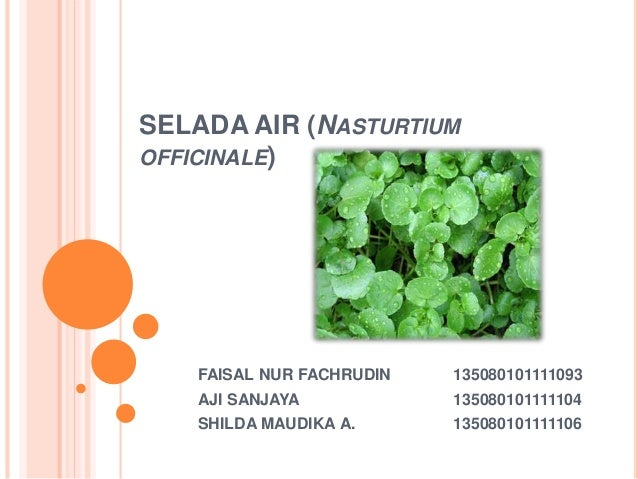 SELADA AIR (NASTURTIUM OFFICINALE) FAISAL NUR FACHRUDIN 135080101111093 AJI SANJAYA 135080101111104 SHILDA MAUDIKA A. 1350...