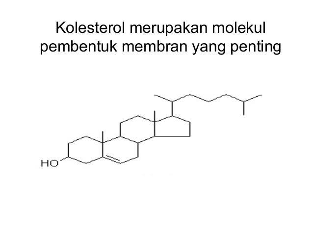 DAG & IP3 (2nd MESSENGER) Phospholipase C Receptor Polypeptide hormone PI PIP2 PI PIP2 IP3 DAG Protein kinase C PI PIP2 IP...