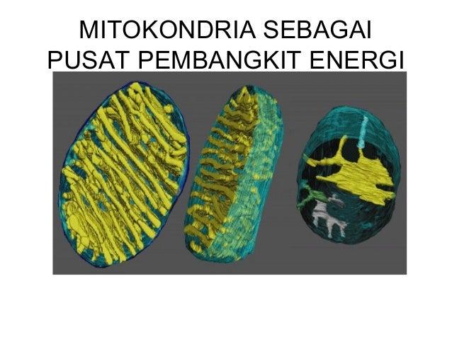 Total produksi ATP Tabel produksi ATP Reaksi ATP NADH FADH2 ATP dari transport elektron Total ATP Glikolisis 2 2 0 4 6 Dek...