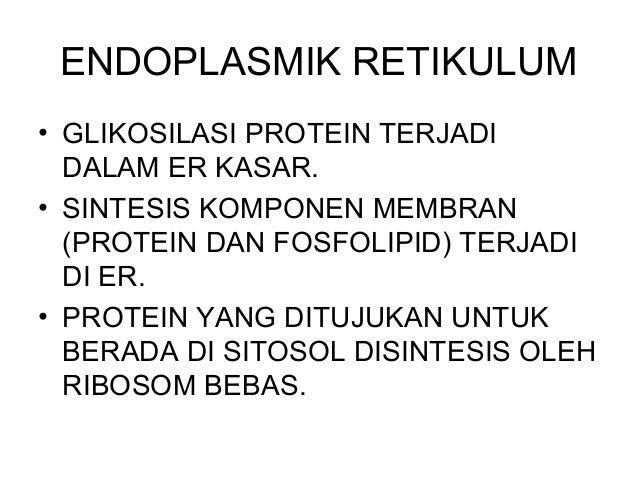 Glikosilasi di Endoplasmik Retikulum