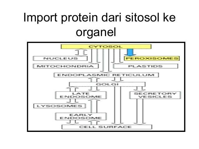 Sel dan organela Universitas Diponegoro