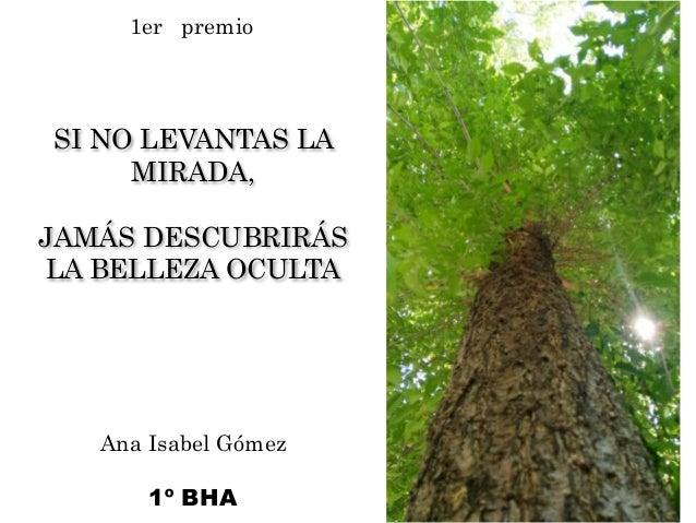 SI NO LEVANTAS LA MIRADA, JAMÁS DESCUBRIRÁS LA BELLEZA OCULTA Ana Isabel Gómez 1º BHA 1er premio